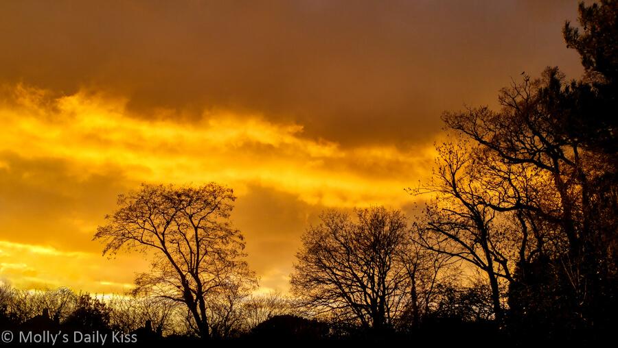 Sky ablaze with Orange sunset through winter trees