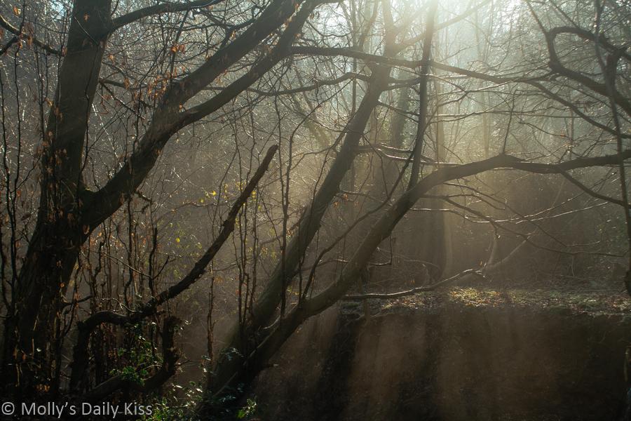 Sunbeams through winter woodland trees and morning mist