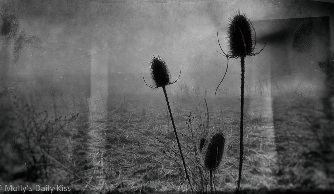 Seed heads on cold mist day with wet plate edit