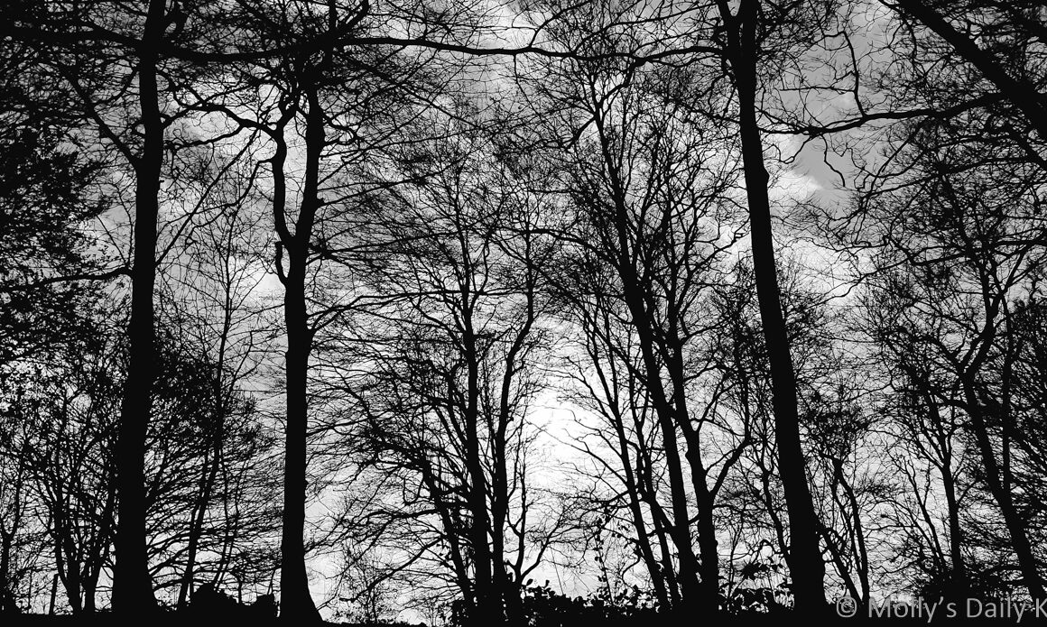 winter tree silhoutted against sky are like burnt nerves