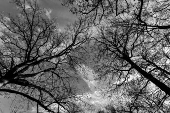 Looking up at winter trees against the sky