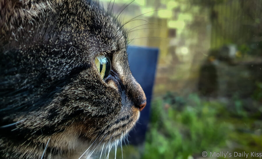 Philosophical cat looking out of window with garden reflected in it's eye