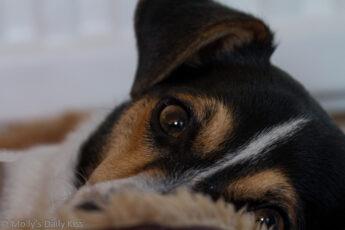 looking into dogs eye who is my true friend