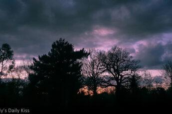 winter sunset dusk through trees