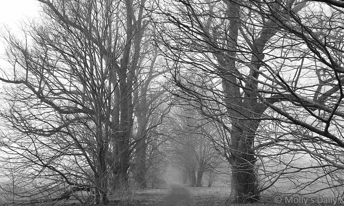 Misty path through winter trees