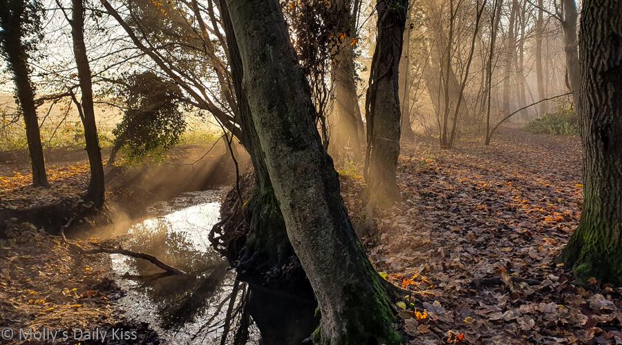 winter sunlight through trees and mist