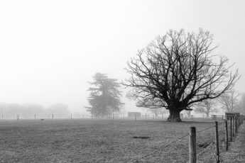 one tree stands out from shawl of mist in black and white