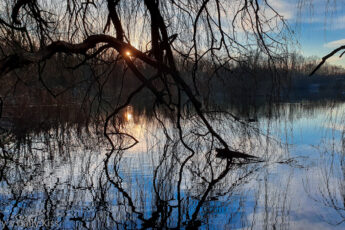 winter sun through trees reflected in pond