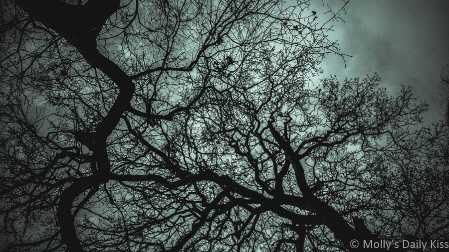dark winter trees against dark grey sky is strangeness