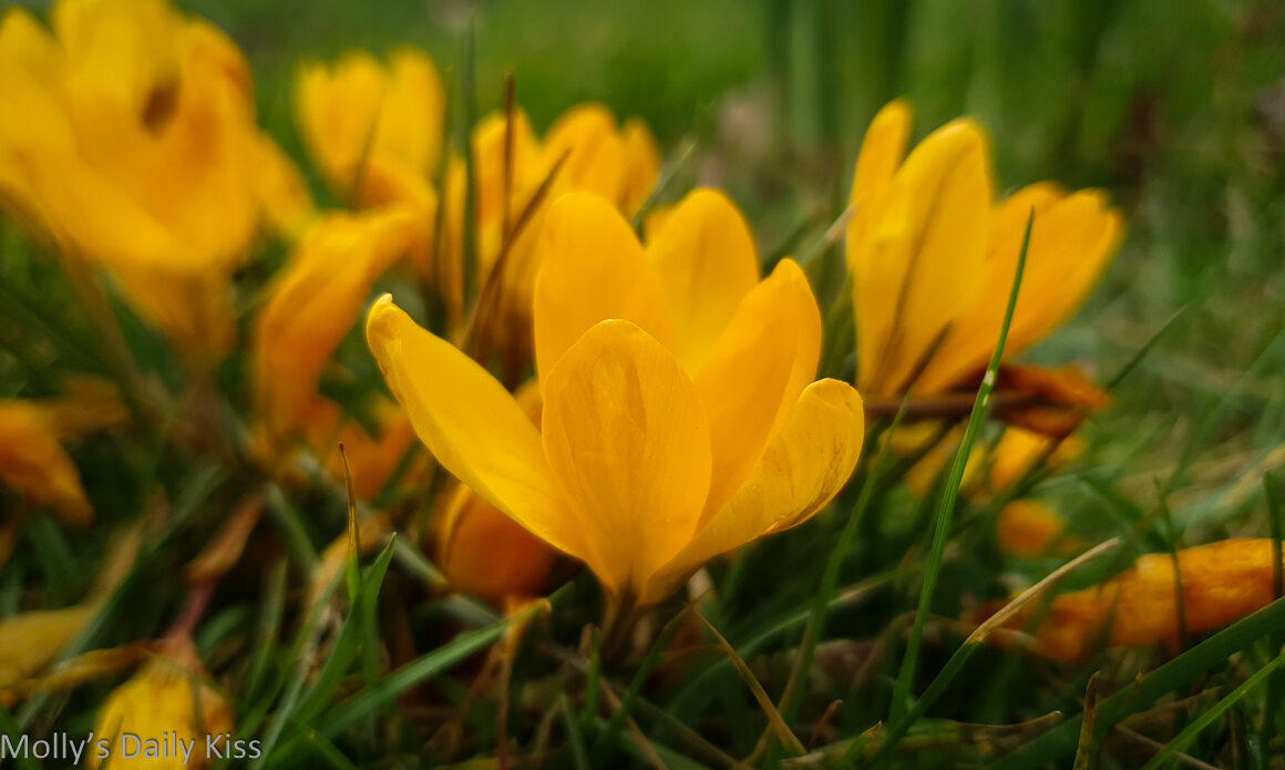 Yellow crocus is closest to light