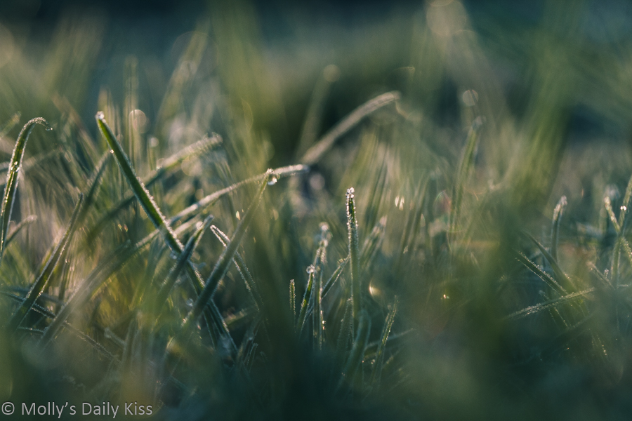 frosted grass bokeh