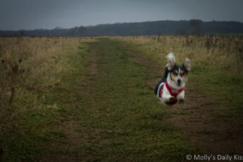 Dog in mid run in the middle of the air