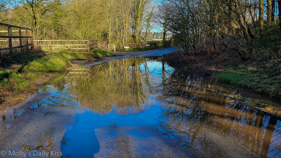Large puddle water with blue skies and trees reflected