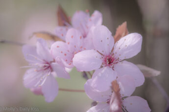 Pink blossom is perfection