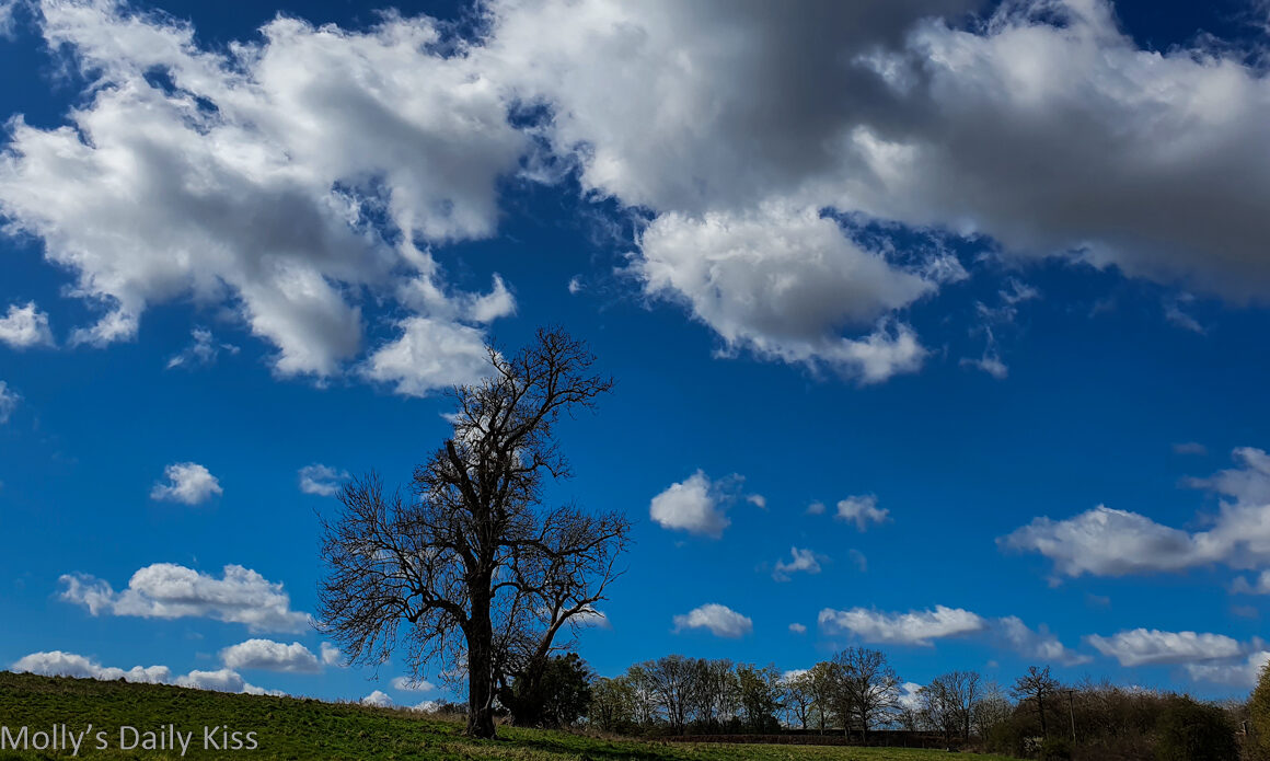 Blue heavens is spring blue sky with big white fluffy clouds