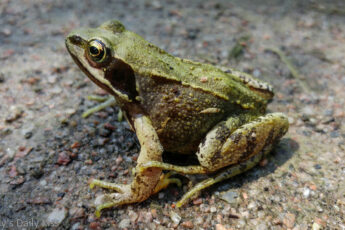 frog on path is Amphibians