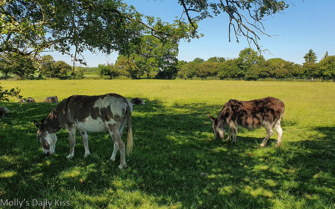 Donkey under the trees in sunny field
