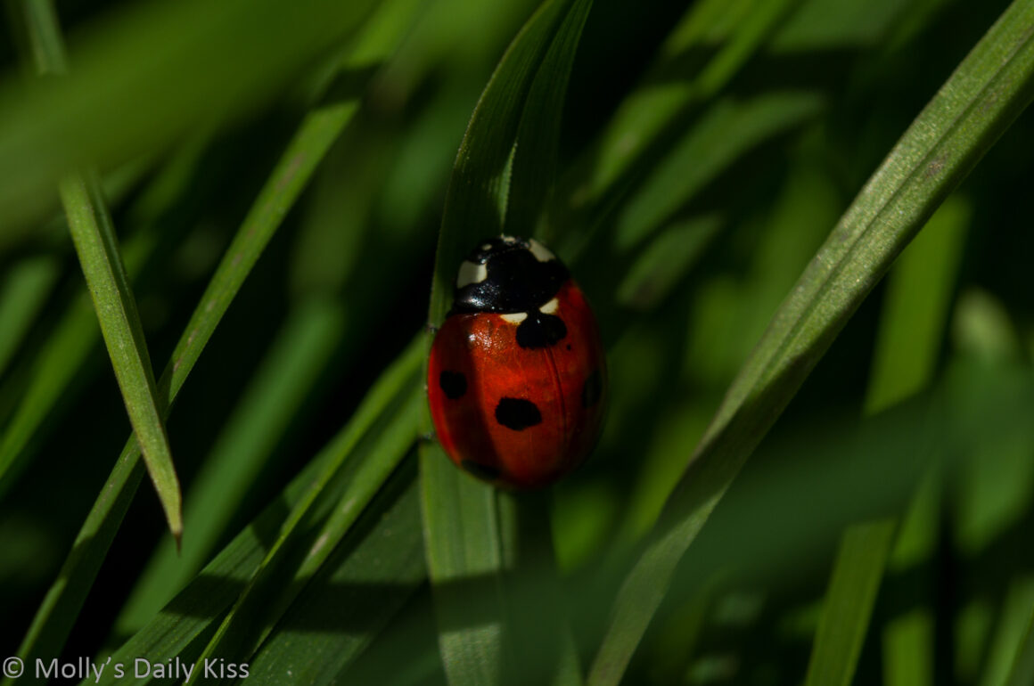 Red lady bird in the grass stems is little things
