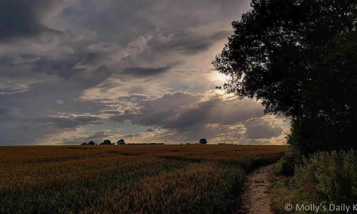 sun through clouds over wheat field