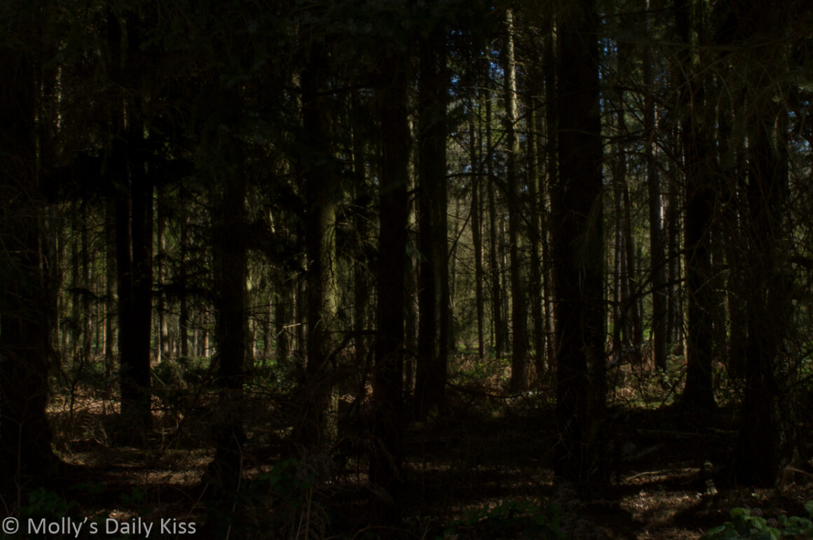 Looking through forest trees